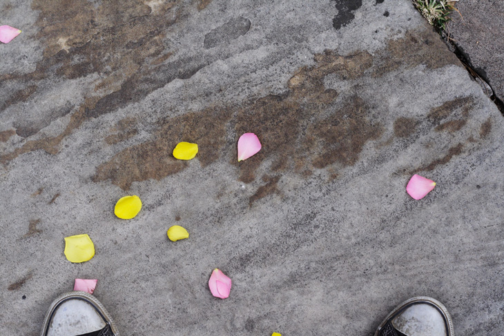 Converse Petals