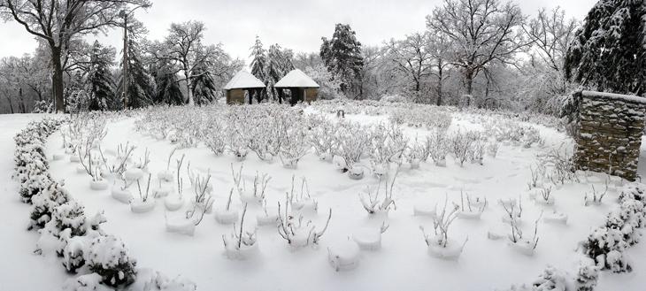Rose Garden & Greenwood pond