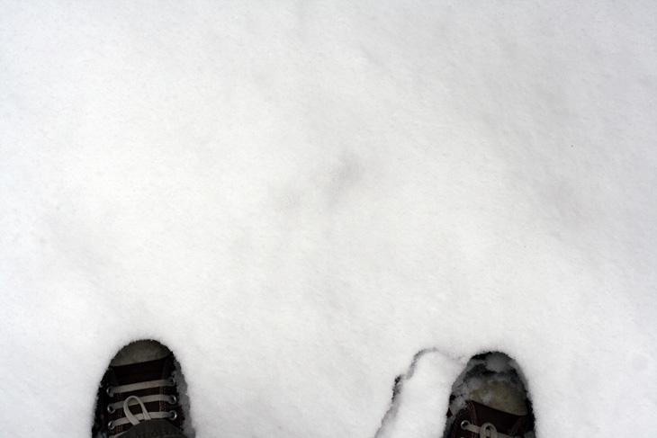 chucks, snow!